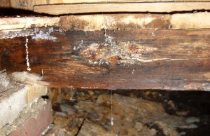zwam in balk en vloer langdurig nat hout